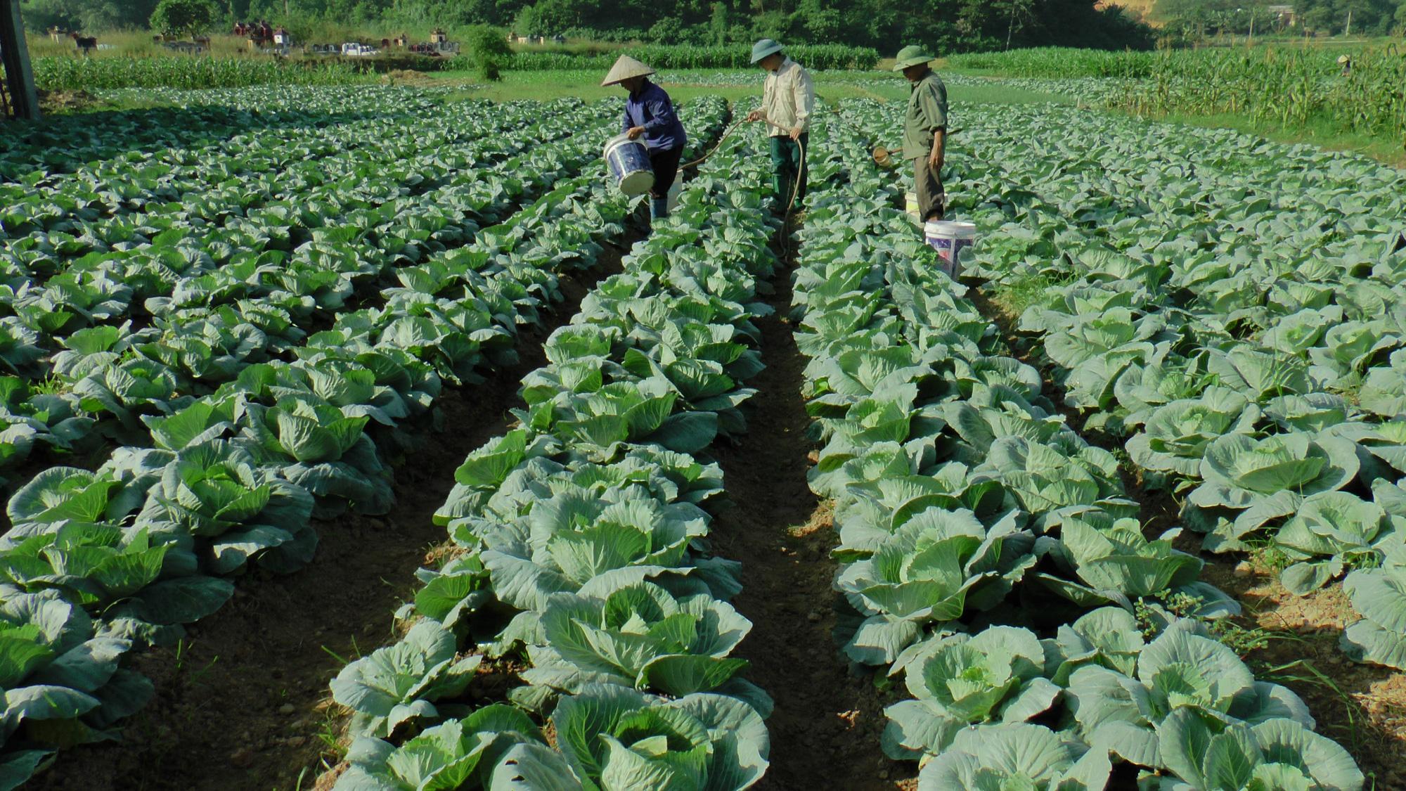 Trung Quốc lũ lụt, nguy cơ thiếu hụt nông sản, Việt Nam tăng tốc sản xuất vụ đông để xuất khẩu - Ảnh 1.