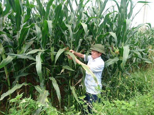Trung Quốc lũ lụt, nguy cơ thiếu hụt nông sản, Việt Nam tăng tốc sản xuất vụ đông để xuất khẩu - Ảnh 2.
