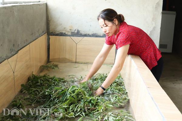 """Phú Thọ: Lập HTX, gắn mác cho """"rau nhà nghèo"""" thu mỗi ngày cả triệu đồng - Ảnh 6."""