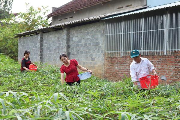 """Phú Thọ: Lập HTX, gắn mác cho """"rau nhà nghèo"""" thu mỗi ngày cả triệu đồng - Ảnh 1."""