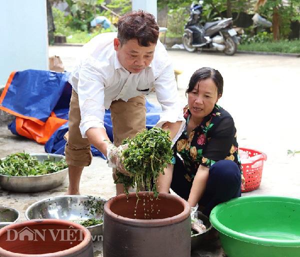 """Phú Thọ: Lập HTX, gắn mác cho """"rau nhà nghèo"""" thu mỗi ngày cả triệu đồng - Ảnh 8."""