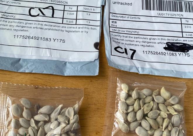 Mỹ công bố sự thật phía sau những gói hạt giống bí ẩn gửi từ Trung Quốc - Ảnh 2.
