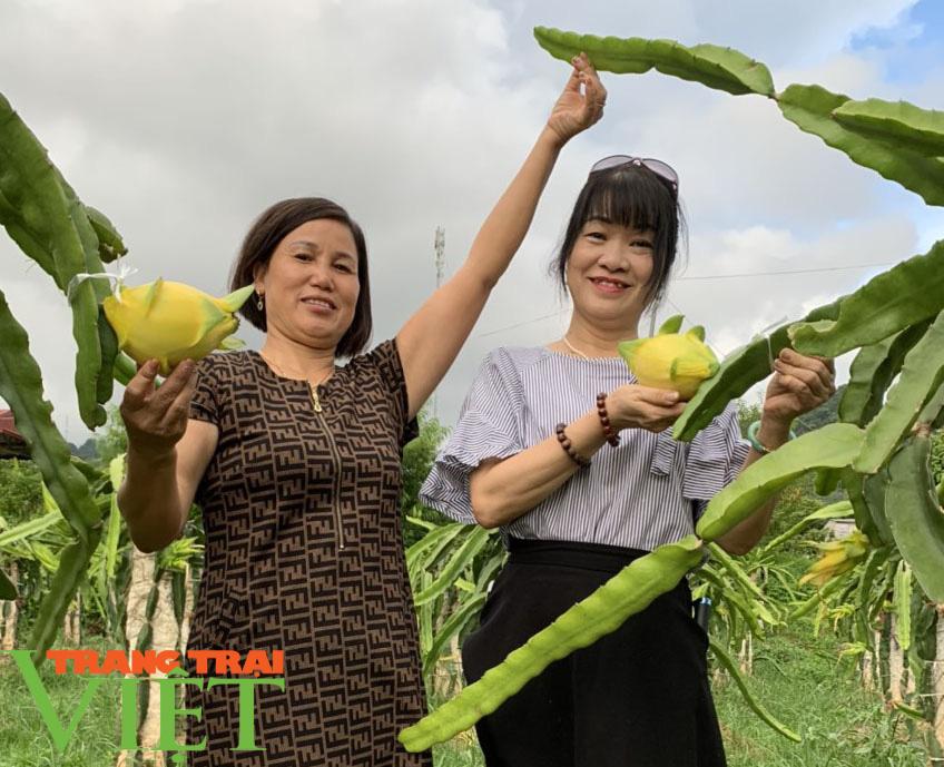 Nông dân Sơn La: Trồng cây cho trái vàng tươi, thu về vàng thật - Ảnh 2.