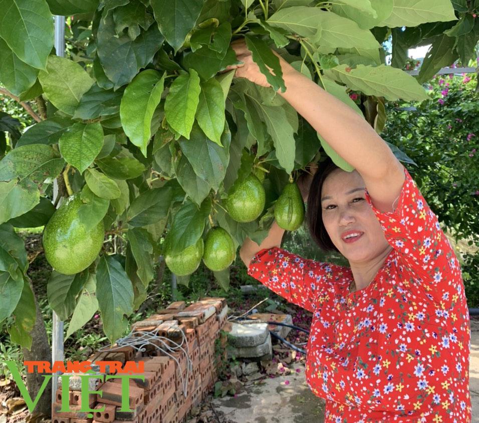 Nông dân Sơn La: Trồng cây cho trái vàng tươi, thu về vàng thật - Ảnh 5.