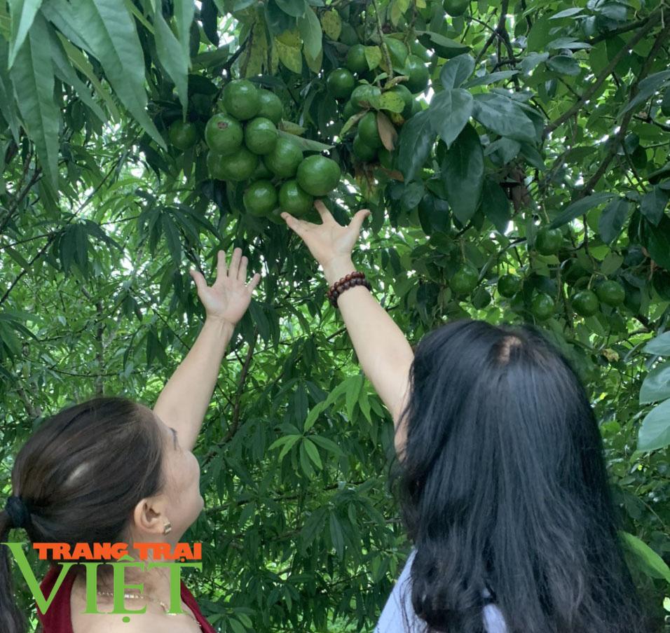 Nông dân Sơn La: Trồng cây cho trái vàng tươi, thu về vàng thật - Ảnh 3.