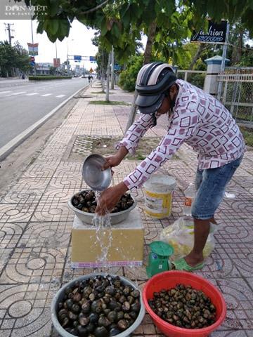 Đồng Tháp: Ốc lác-đặc sản mùa nước nổi giá bán tăng cao, tới 65 ngàn đồng/ký - Ảnh 4.