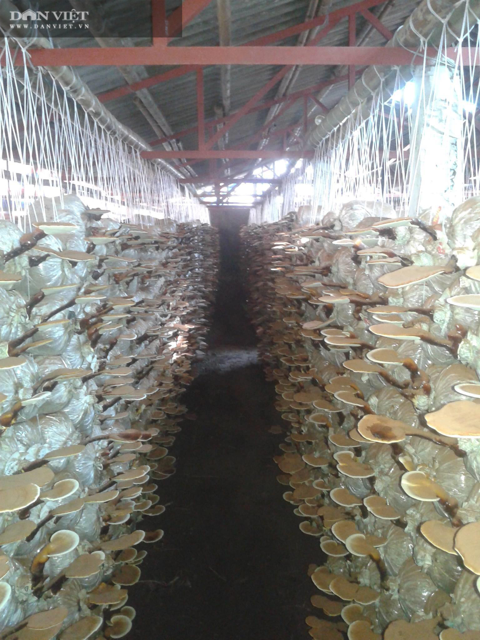 Trồng thứ cây nhìn như nhũ đá, lão nông thu hoạch tiền tỷ mỗi năm - Ảnh 4.