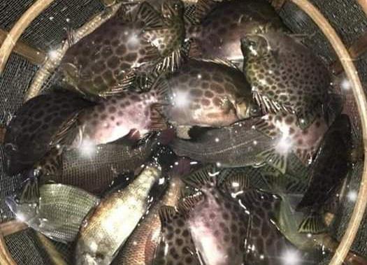 TT-Huế: Dân rớt nước mắt nhìn toàn cá đặc sản đắt tiền lăn ra chết - Ảnh 5.