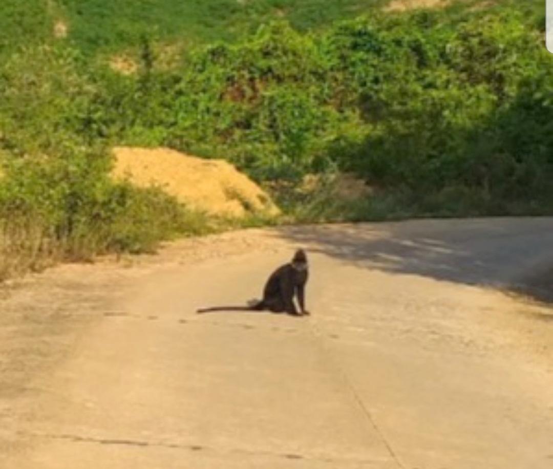 Quảng Trị: Vụ loài thú rừng quý hiếm xuống đường cắn người trọng thương, đề nghị đưa chó nghiệp vụ xua đuổi - Ảnh 1.
