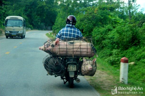 Giá lợn hơi nhiều nơi lao dốc, ở đây có loại thịt lợn giữ giá kỷ lục 200.000 đồng/kg - Ảnh 3.