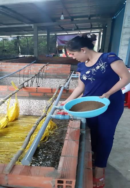 """Bến Tre: Cô nông dân xinh đẹp nuôi 36.000 con lươn không bùn, chưa bán thương lái đã """"đặt gạch"""" đòi mua - Ảnh 1."""