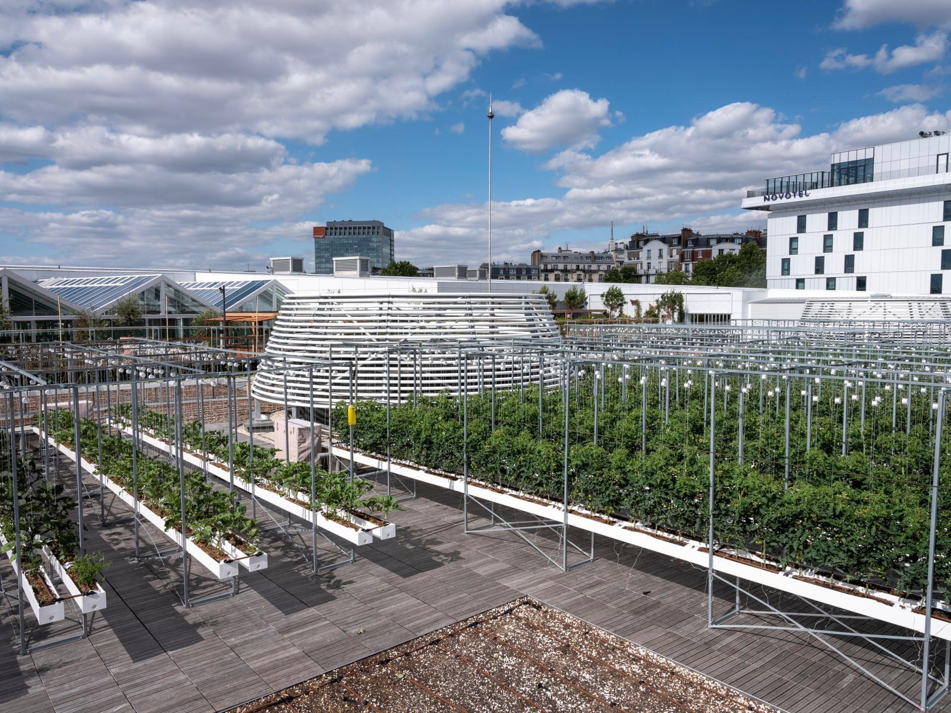 Bên trong nông trại đô thị trên mái nhà lớn nhất thế giới - Ảnh 3.