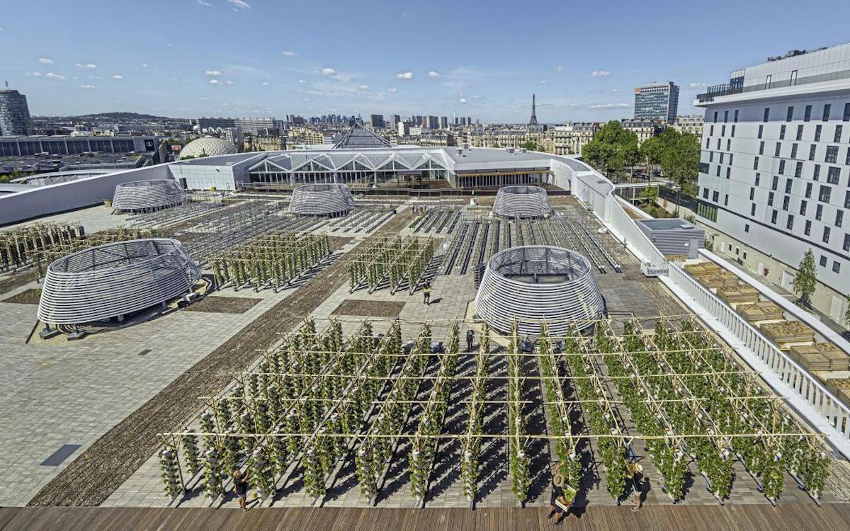 Bên trong nông trại đô thị trên mái nhà lớn nhất thế giới - Ảnh 1.