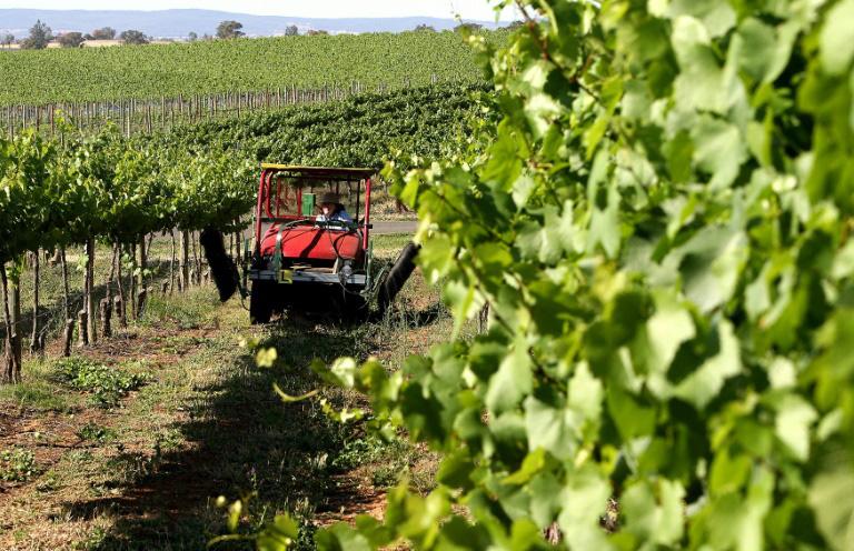 Chưa đầy 1 tháng, Trung Quốc mở 2 cuộc điều tra rượu vang Úc - Ảnh 1.