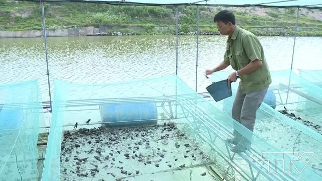 Cho ếch ăn tỏi mỗi ngày, lão nông kiếm về hàng trăm tỷ đồng - Ảnh 2.