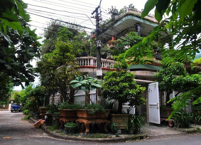 """Ấn tượng vườn bonsai ngược trên sân thượng nhà phố của """"dị nhân"""" Quảng Nam - Ảnh 1."""