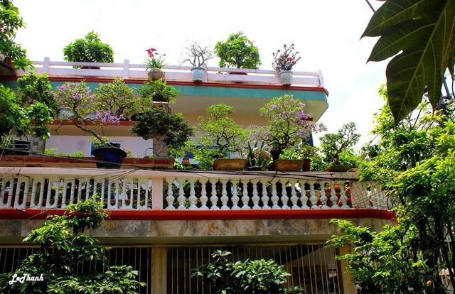 """Ấn tượng vườn bonsai ngược trên sân thượng nhà phố của """"dị nhân"""" Quảng Nam - Ảnh 2."""
