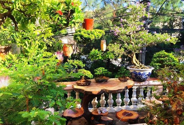 """Ấn tượng vườn bonsai ngược trên sân thượng nhà phố của """"dị nhân"""" Quảng Nam - Ảnh 3."""