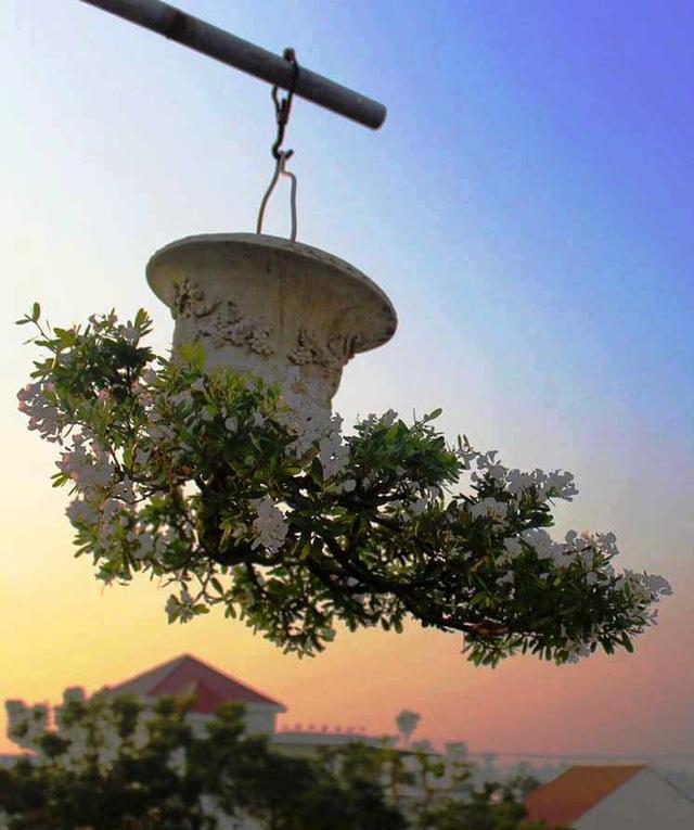 """Ấn tượng vườn bonsai ngược trên sân thượng nhà phố của """"dị nhân"""" Quảng Nam - Ảnh 4."""