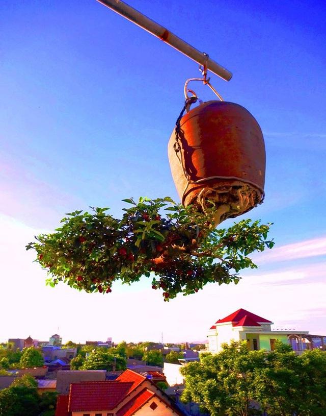 """Ấn tượng vườn bonsai ngược trên sân thượng nhà phố của """"dị nhân"""" Quảng Nam - Ảnh 5."""