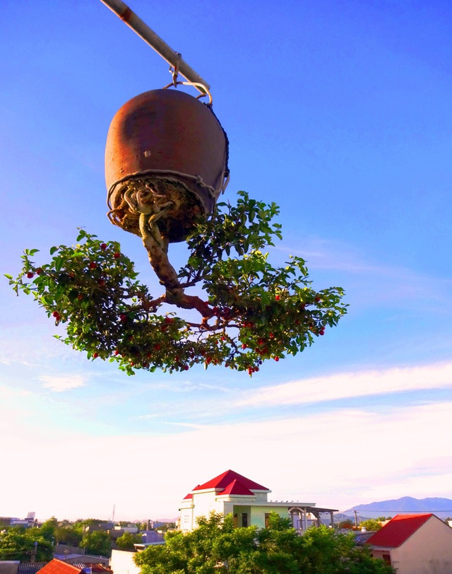 """Ấn tượng vườn bonsai ngược trên sân thượng nhà phố của """"dị nhân"""" Quảng Nam - Ảnh 7."""