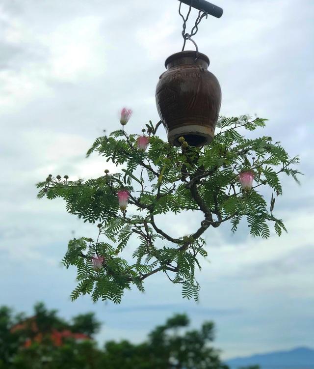 """Ấn tượng vườn bonsai ngược trên sân thượng nhà phố của """"dị nhân"""" Quảng Nam - Ảnh 8."""