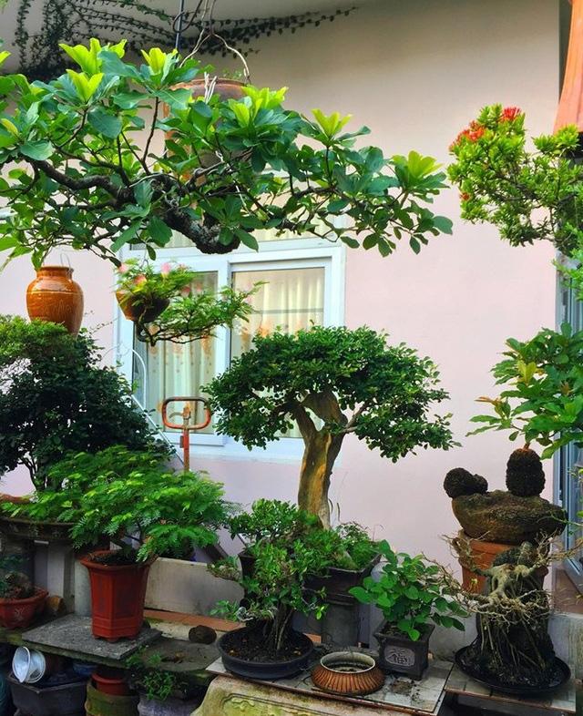 """Ấn tượng vườn bonsai ngược trên sân thượng nhà phố của """"dị nhân"""" Quảng Nam - Ảnh 9."""