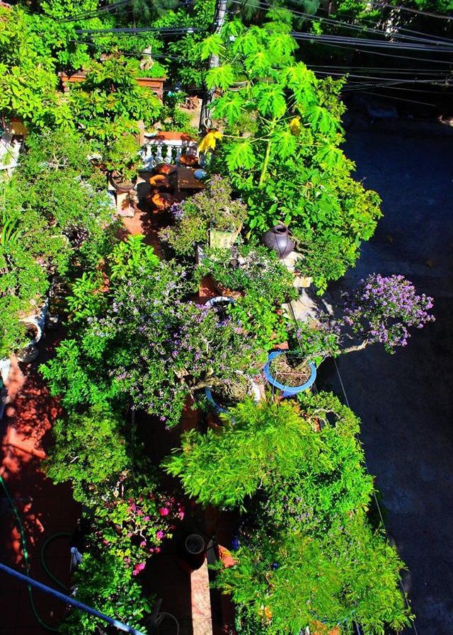 """Ấn tượng vườn bonsai ngược trên sân thượng nhà phố của """"dị nhân"""" Quảng Nam - Ảnh 10."""