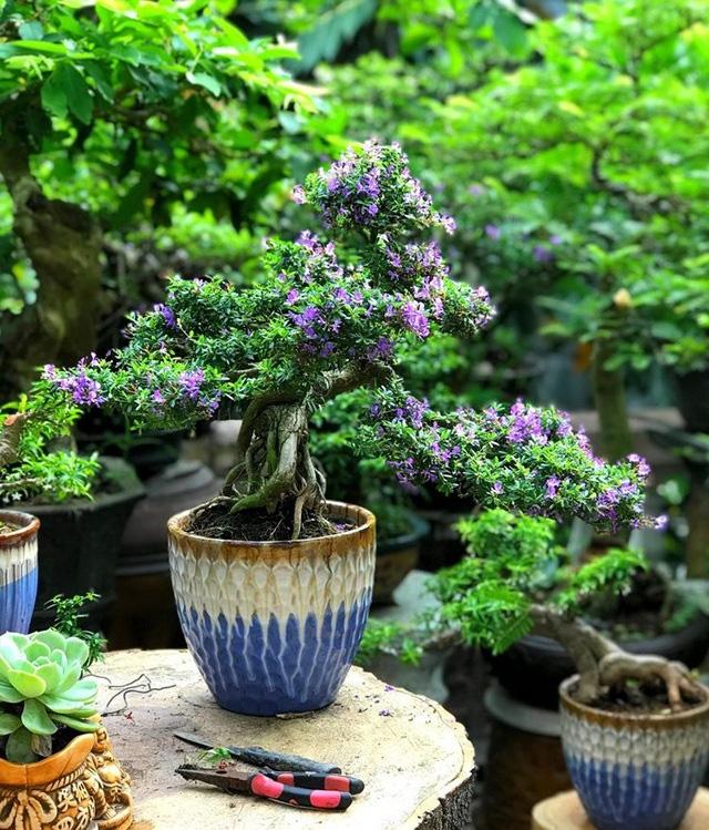 """Ấn tượng vườn bonsai ngược trên sân thượng nhà phố của """"dị nhân"""" Quảng Nam - Ảnh 12."""
