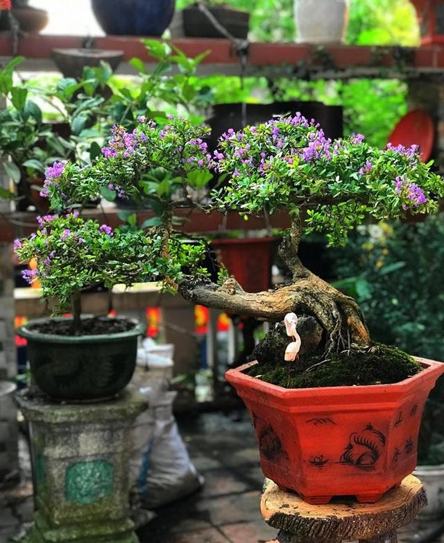 """Ấn tượng vườn bonsai ngược trên sân thượng nhà phố của """"dị nhân"""" Quảng Nam - Ảnh 13."""