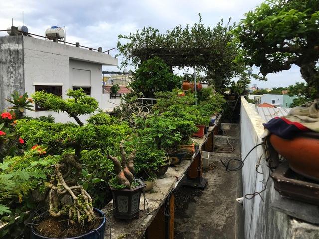 """Ấn tượng vườn bonsai ngược trên sân thượng nhà phố của """"dị nhân"""" Quảng Nam - Ảnh 14."""