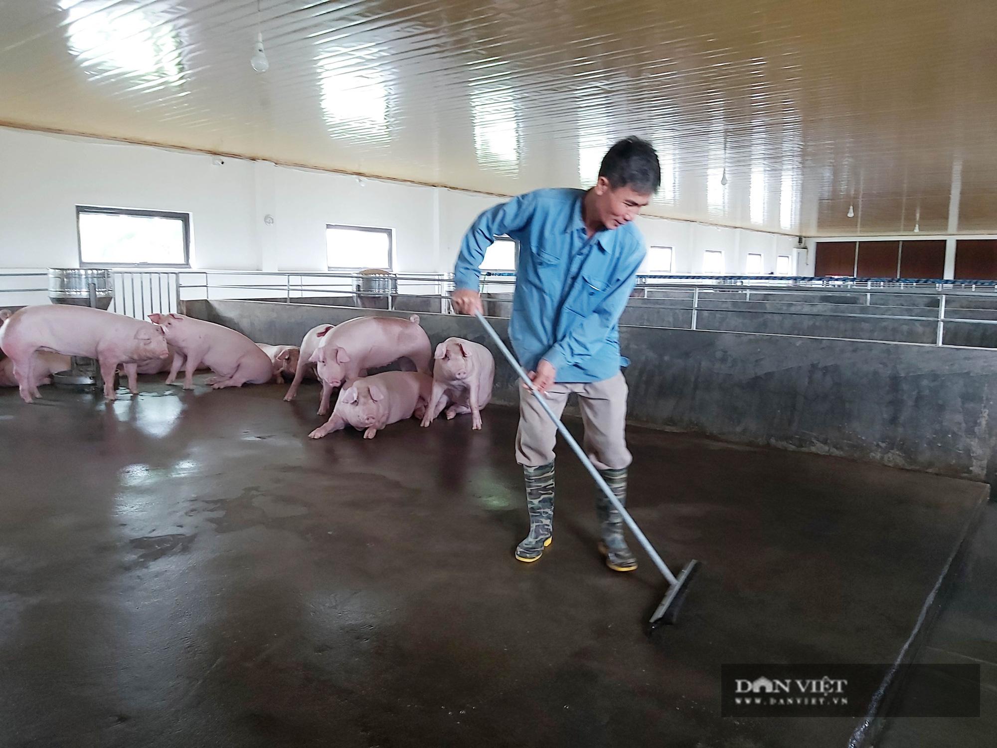 """Sau dịch tả lợn Châu Phi, một nông dân ở Thái Bình """"liều"""" đầu tư trại lợn 800 triệu đồng, thu tiền đều tay - Ảnh 7."""