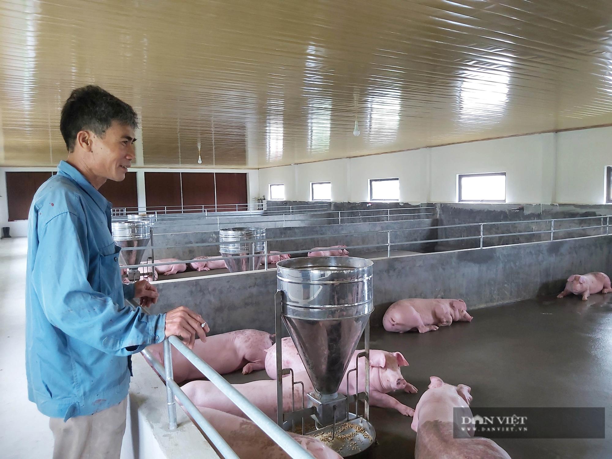 Thái Bình: Từ 3 con lợn nái, trang trại này thu cả trăm triệu đồng - Ảnh 3.