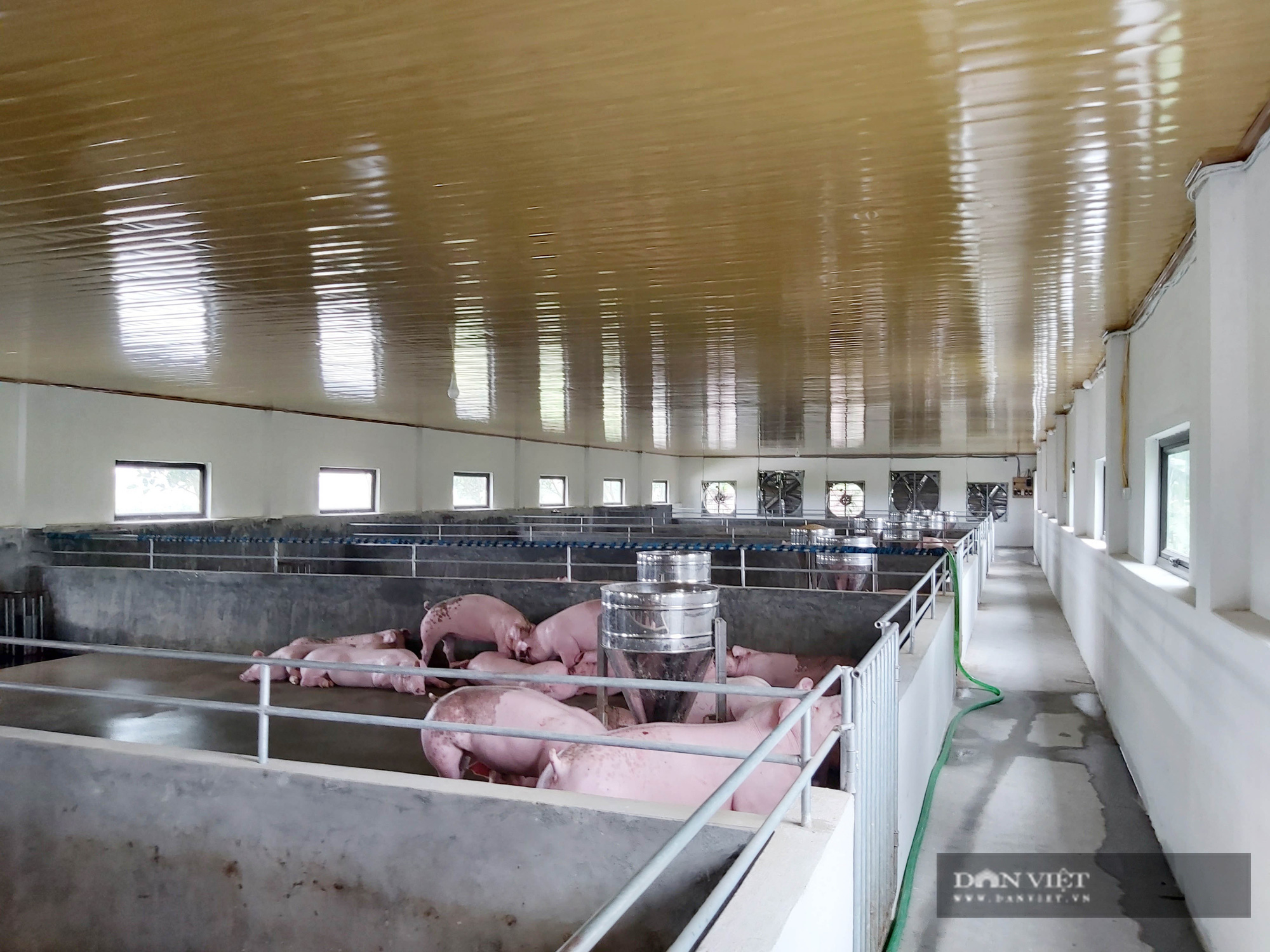 """Sau dịch tả lợn Châu Phi, một nông dân ở Thái Bình """"liều"""" đầu tư trại lợn 800 triệu đồng, thu tiền đều tay - Ảnh 3."""