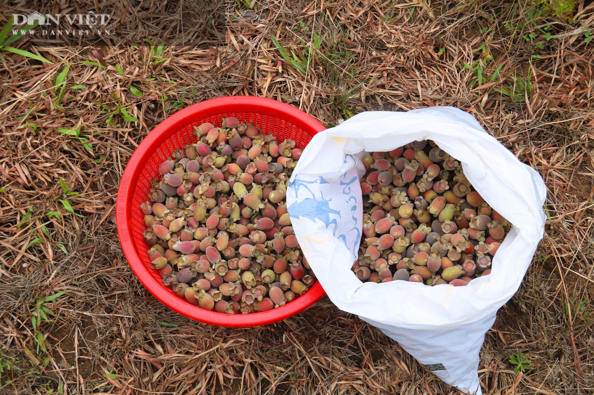 Hà Tĩnh: Người dân đổ xô lên đồi hái sim rừng, kiếm tiền triệu mỗi ngày - Ảnh 10.