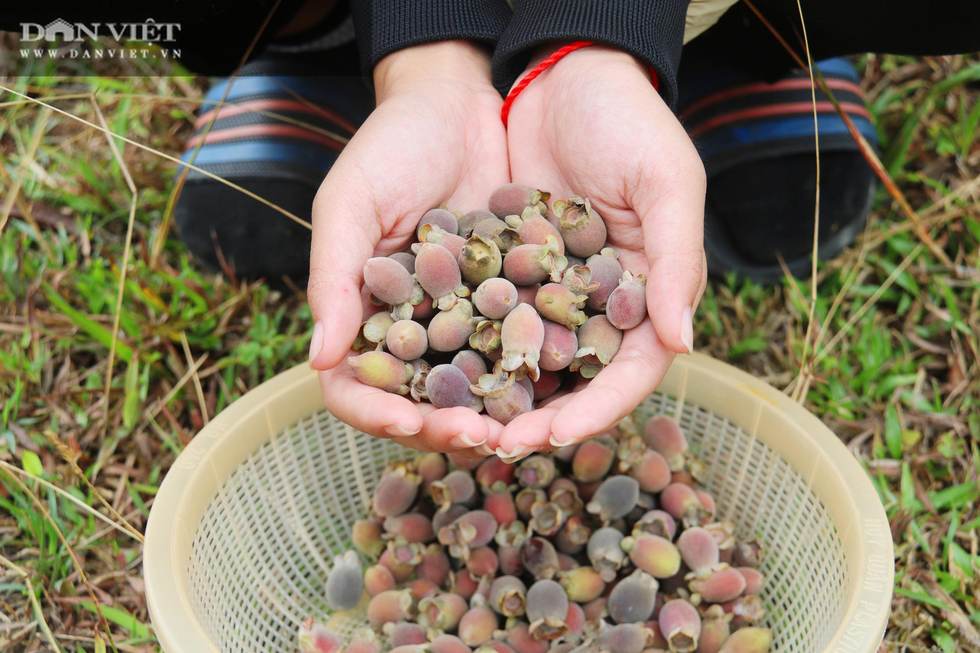 Hà Tĩnh: Người dân đổ xô lên đồi hái sim rừng, kiếm tiền triệu mỗi ngày - Ảnh 11.