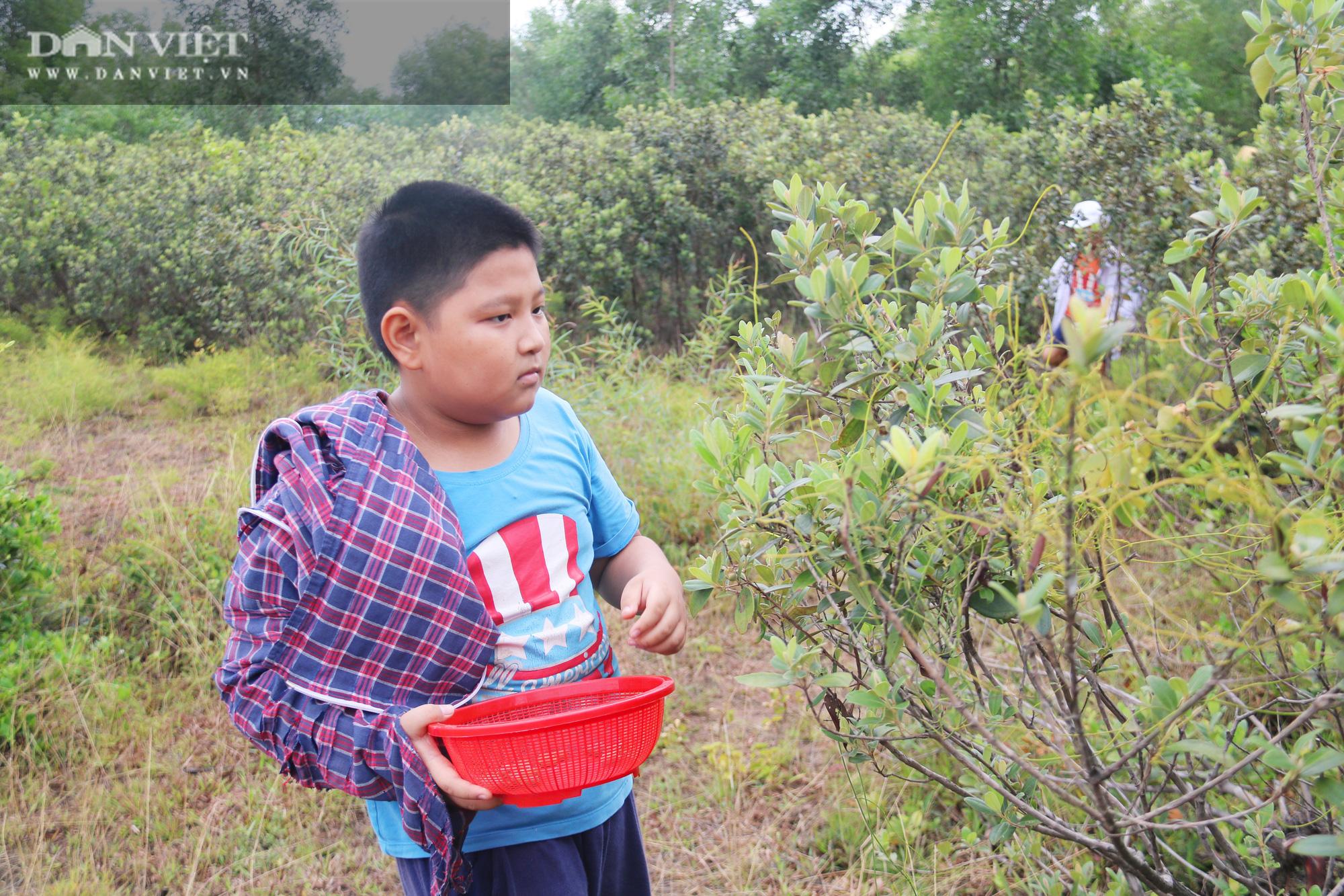Hà Tĩnh: Người dân đổ xô lên đồi hái sim rừng, kiếm tiền triệu mỗi ngày - Ảnh 8.