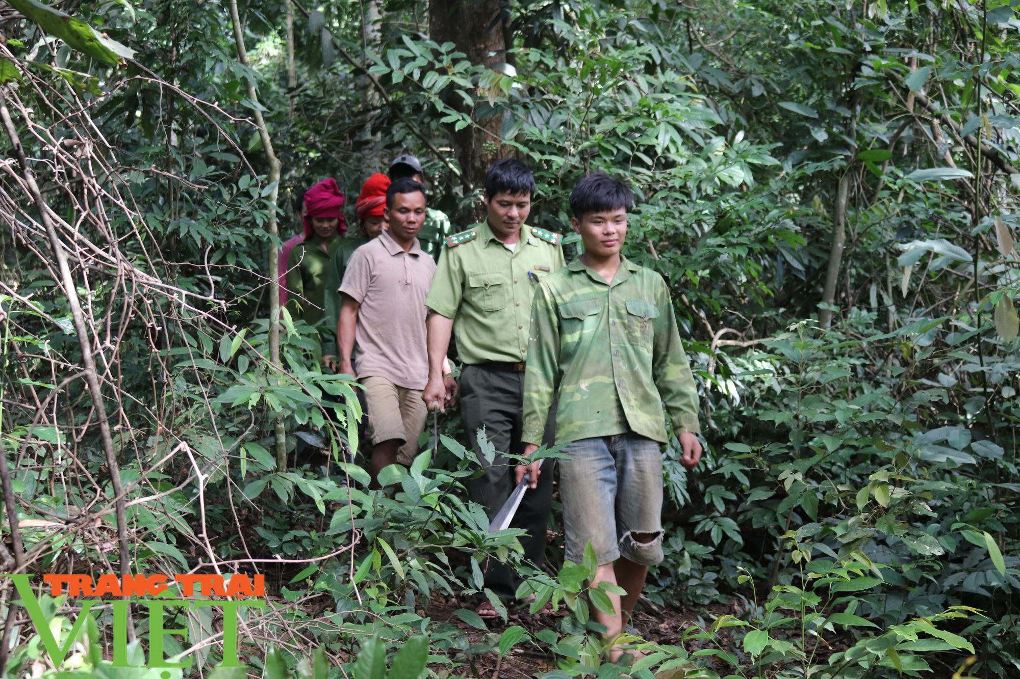 Chiềng Ve làm tốt công tác bảo vệ rừng - Ảnh 3.