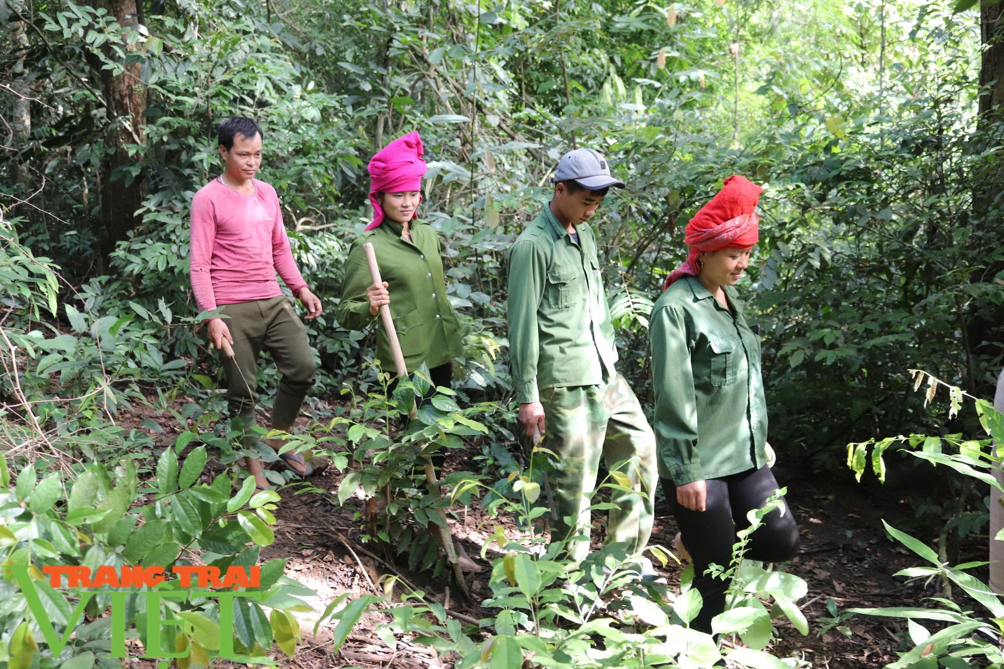 Chiềng Ve làm tốt công tác bảo vệ rừng - Ảnh 5.