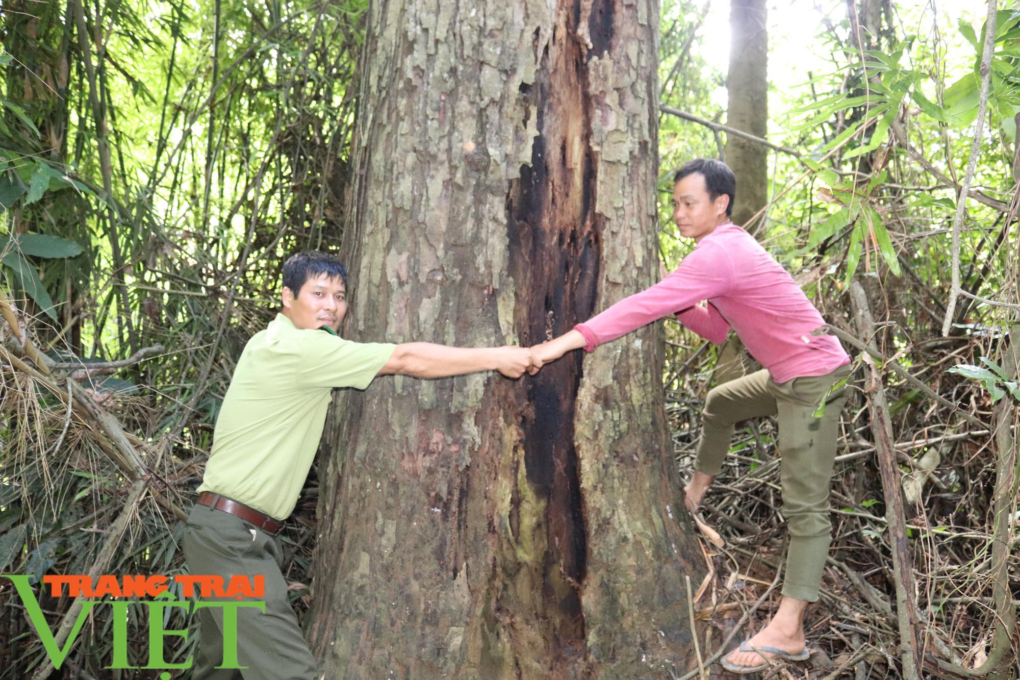 Chiềng Ve làm tốt công tác bảo vệ rừng - Ảnh 6.