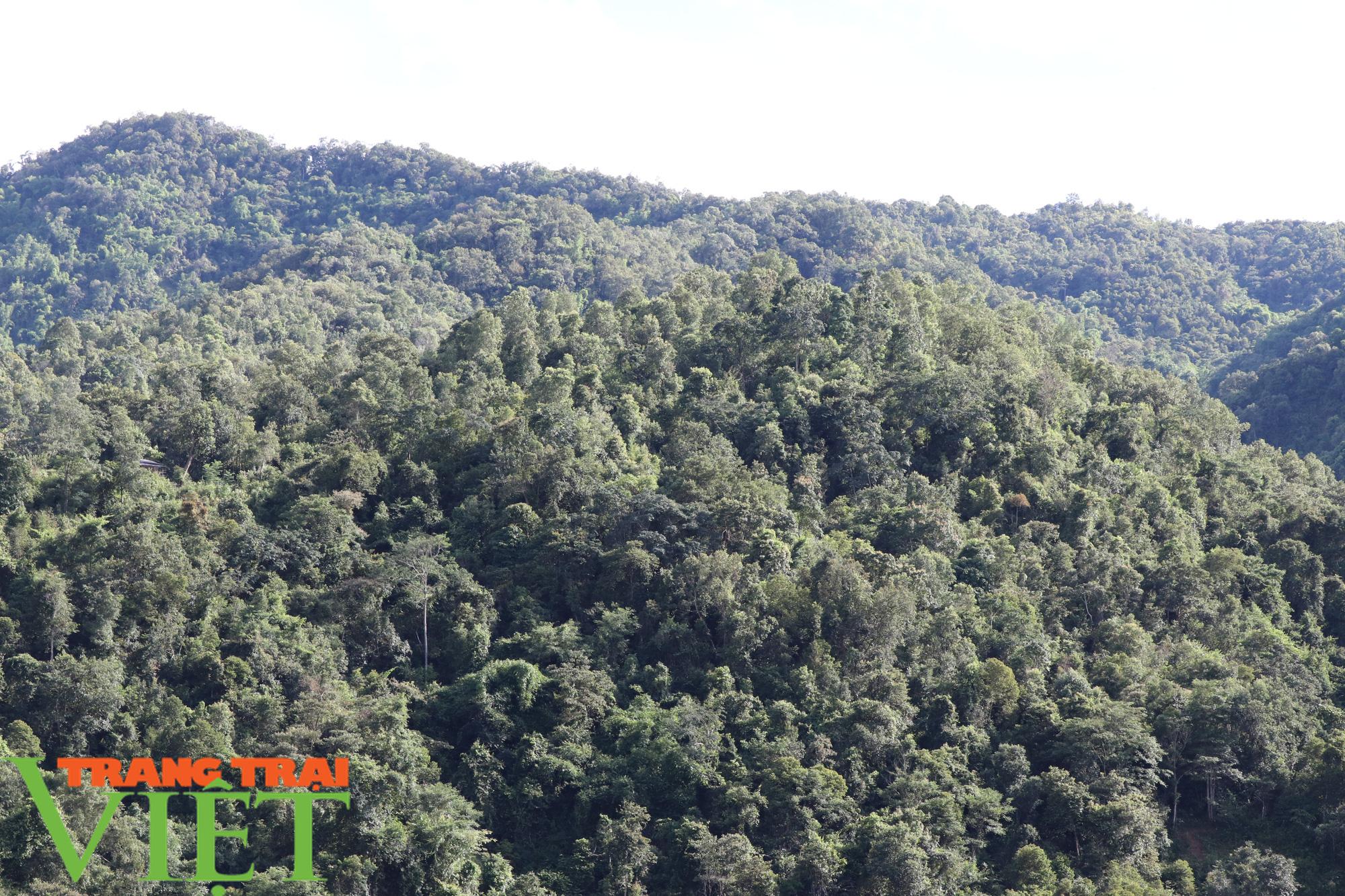 Chiềng Ve làm tốt công tác bảo vệ rừng - Ảnh 7.