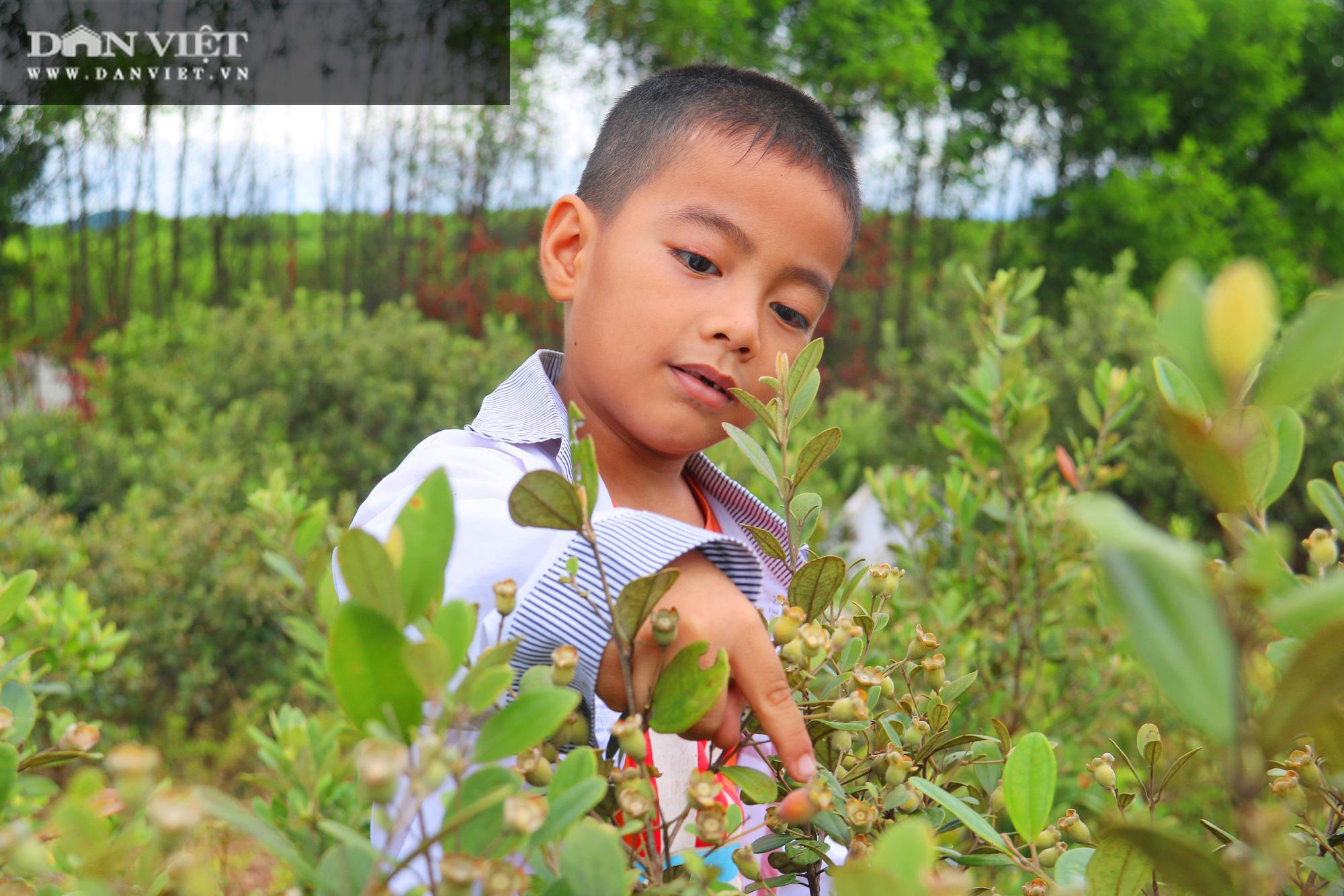 Hà Tĩnh: Người dân đổ xô lên đồi hái sim rừng, kiếm tiền triệu mỗi ngày - Ảnh 1.
