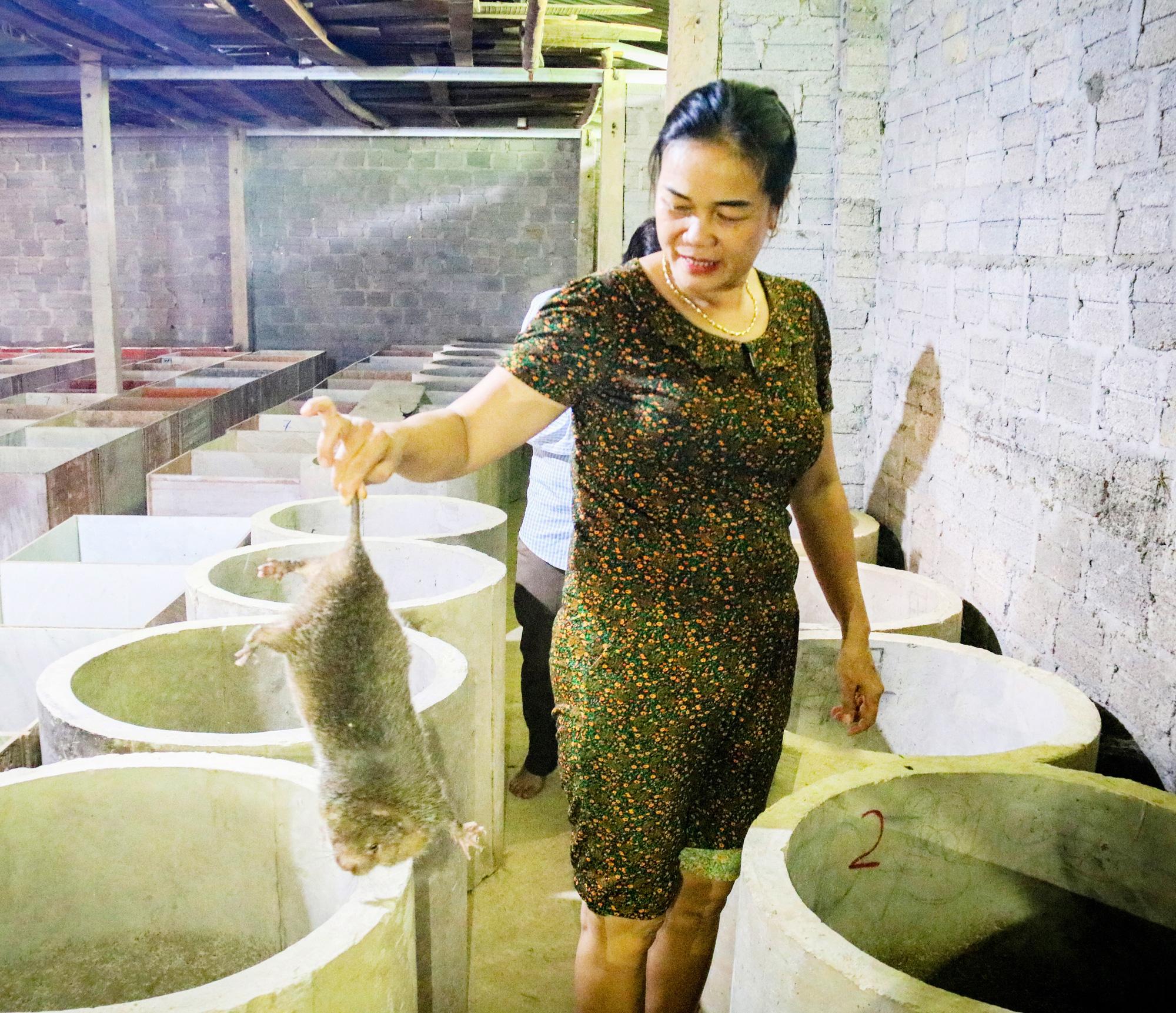 Hà Tĩnh: Nuôi loài chuột khổng lồ, sống không cần nước, lớn lên bán tiền triệu mỗi cặp - Ảnh 1.