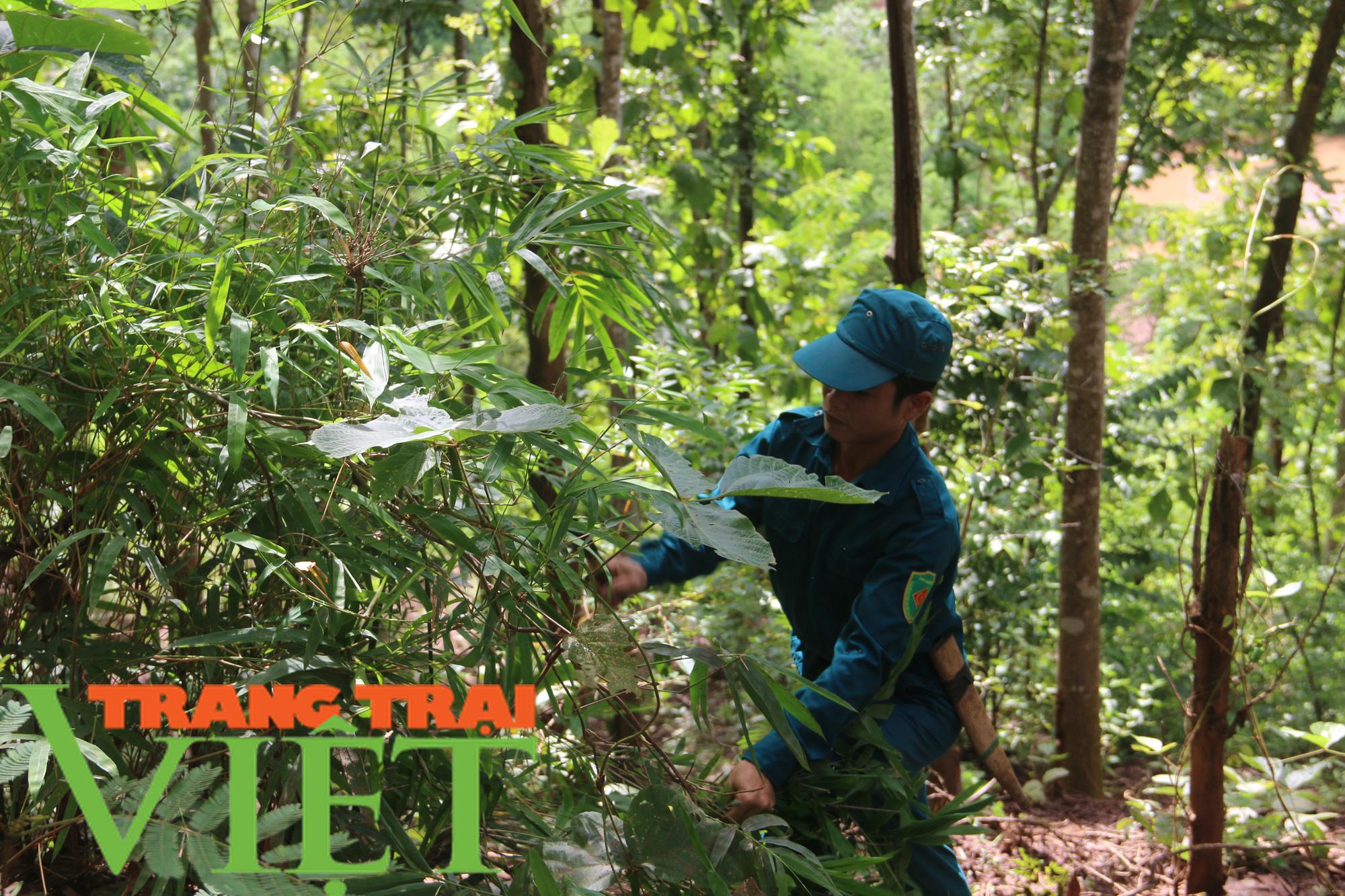 Hạt Kiểm lâm Yên Châu với công tác tuần tra bảo vệ rừng - Ảnh 3.