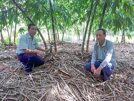 Hậu Giang: Ông Lời trồng giống tre gì mà măng mọc quanh năm, lãi 250 triệu đồng mỗi năm? - Ảnh 1.