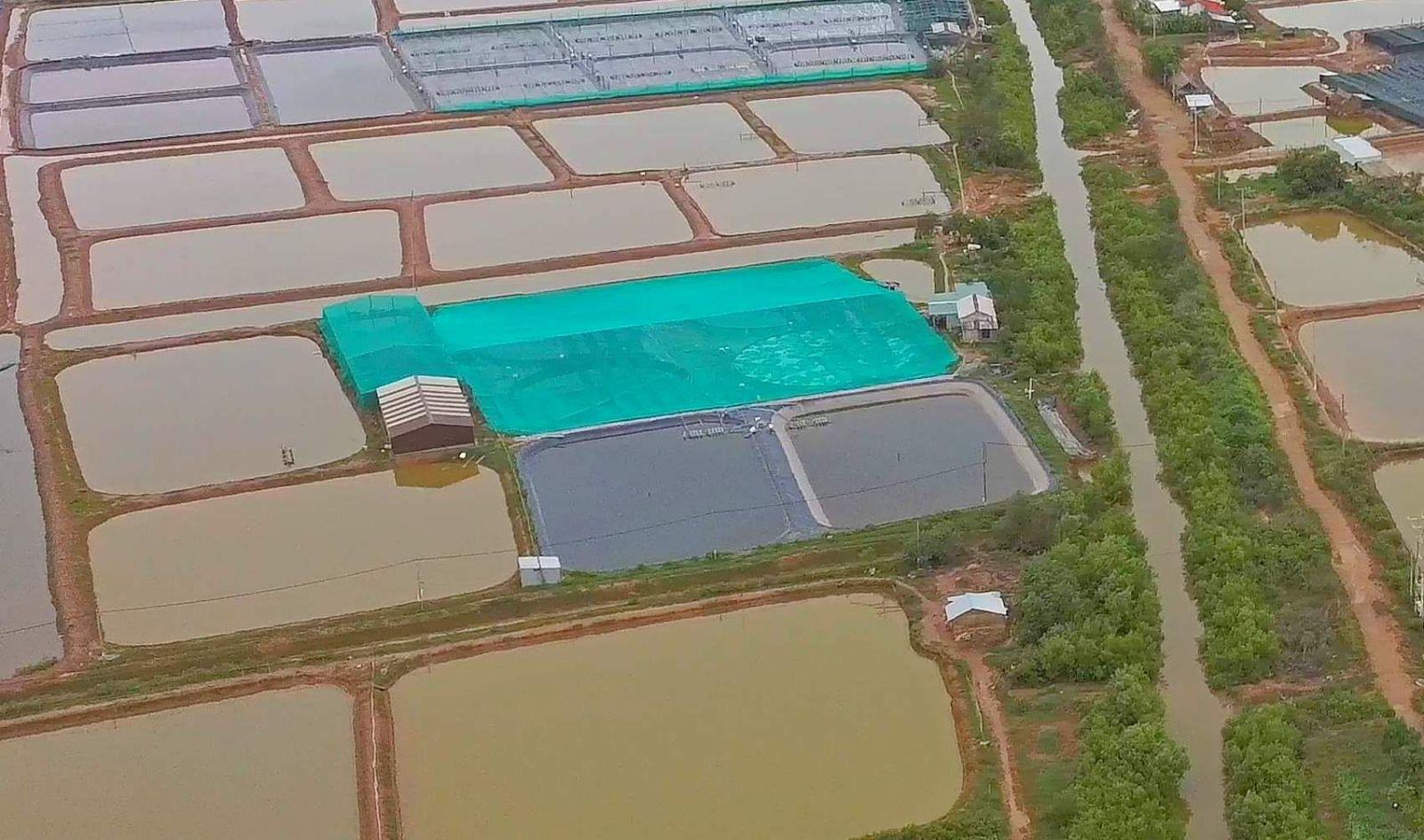 Bạc Liêu: Làm hồ trên cạn nuôi tôm công nghệ cao, 1 năm nuôi 3-4 vụ, mỗi vụ thu 2 tỷ - Ảnh 1.