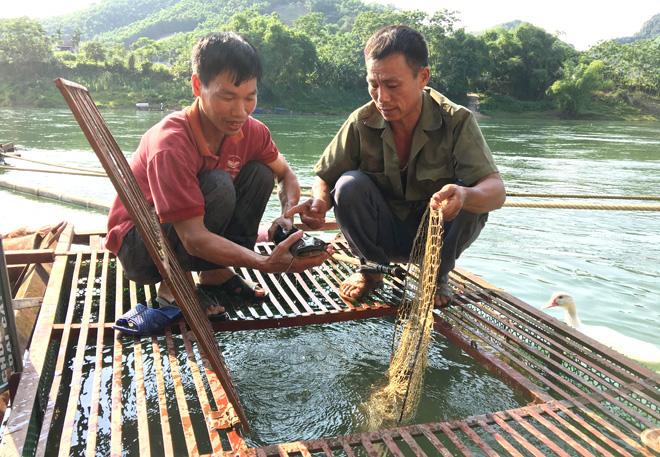 Tuyên Quang: Bắt 316 tấn cá đặc sản đắt tiền, dịch giã như thế, dân bán cá đi đâu mà hết sạch? - Ảnh 1.