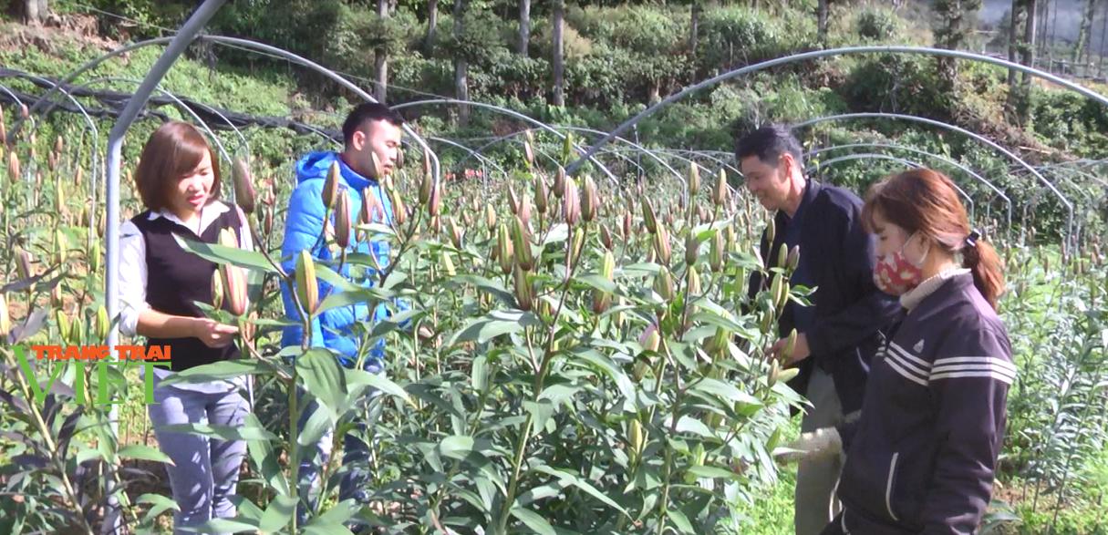 """Lào Cai: Lão nông """"bỏ túi"""" 2 tỷ đồng/năm từ mô hình trồng hoa công nghệ cao - Ảnh 2."""