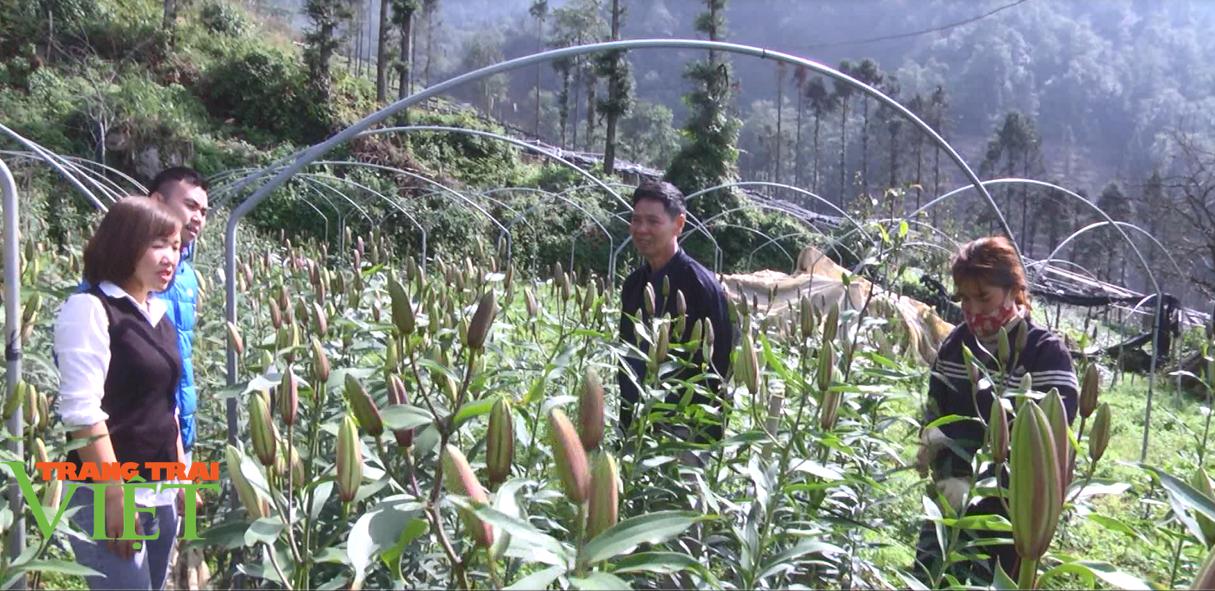 """Lào Cai: Lão nông """"bỏ túi"""" 2 tỷ đồng/năm từ mô hình trồng hoa công nghệ cao - Ảnh 1."""
