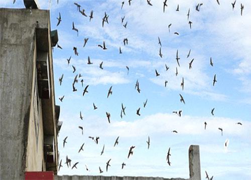 Bình Thuận: Chim tiền tỷ dễ bay trên trời nhưng khó quản lý ở dưới đất - Ảnh 1.